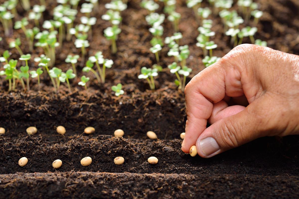 coltivare a marzo