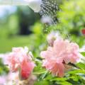 Da oggi via libera alla vendita di piante e fiori