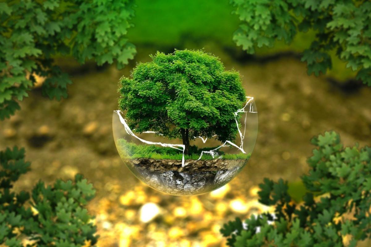 21 marzo 2020, Giornata Internazionale delle Foreste
