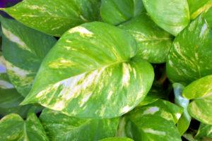 Le piante che purificano l'aria in casa