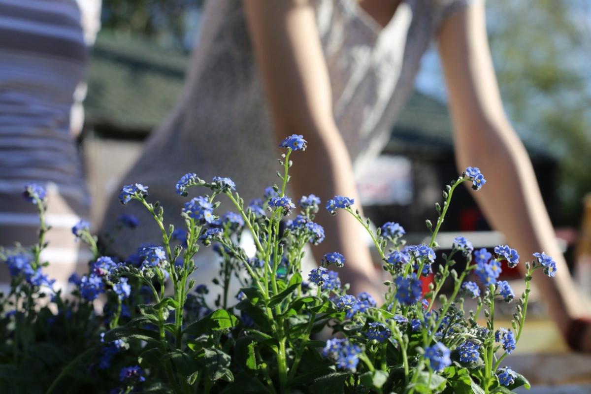 Lavori in giardino nel mese di aprile