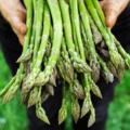 Gli asparagi fanno dimagrire? Tutti i benefici