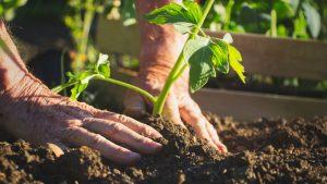 Fare un orto da zero: cosa sapere per iniziare