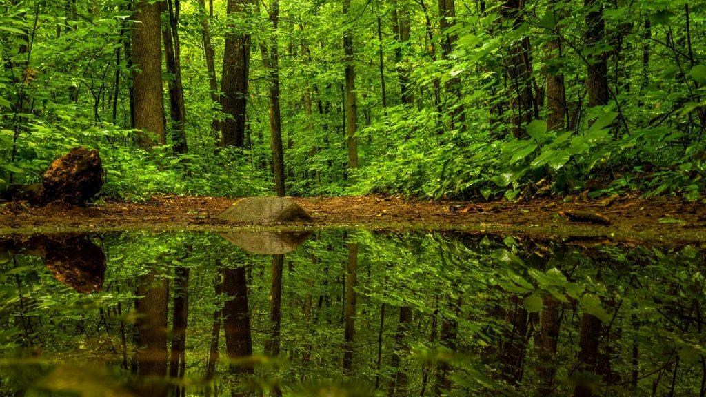 Come aprire una riserva naturale: da dove inizio?