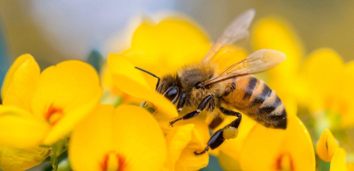 Le api: dichiarate gli esseri viventi più importanti del Pianeta