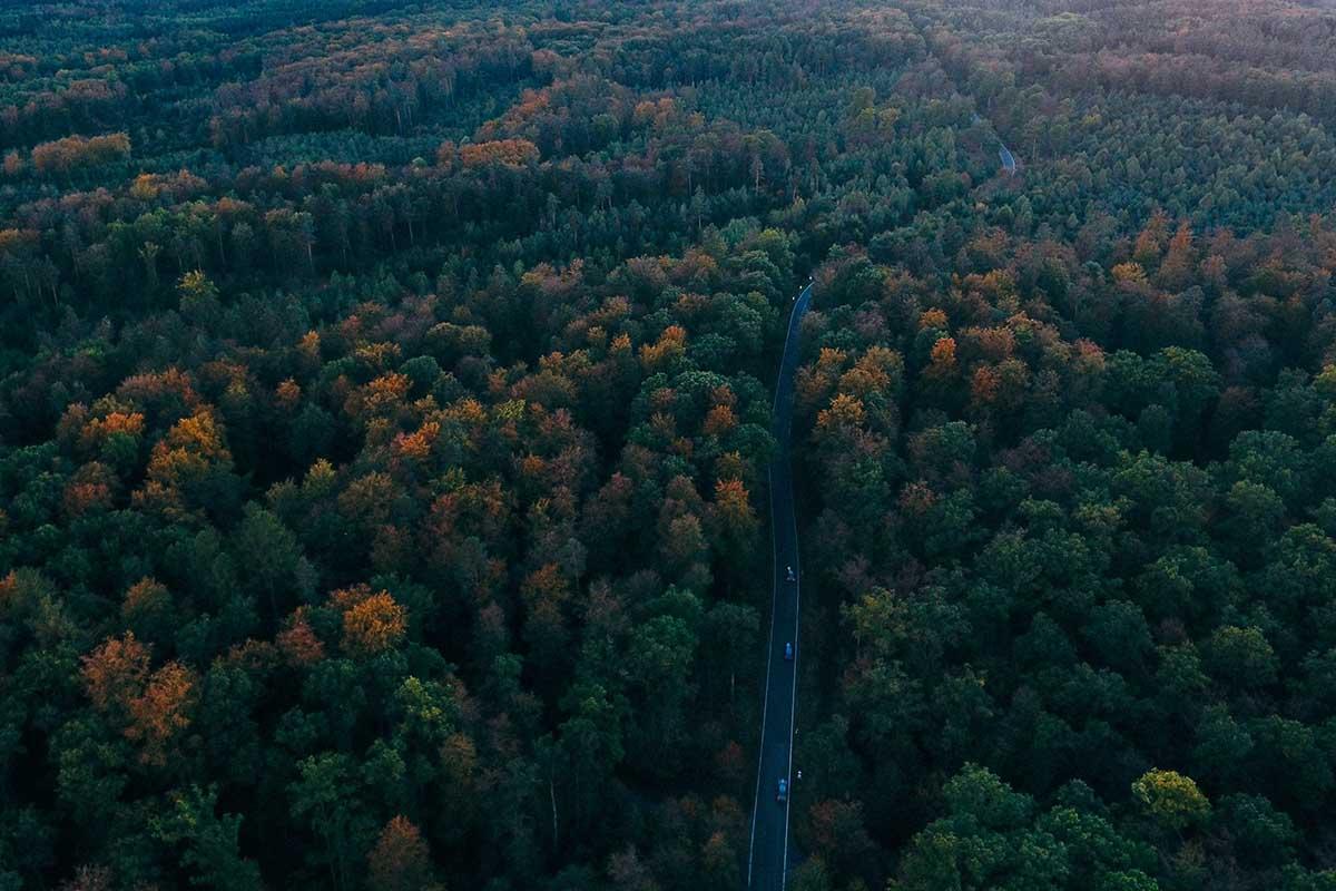 Visitare la foresta nera delle fiabe dei fratelli Grimm: tra natura e mistero