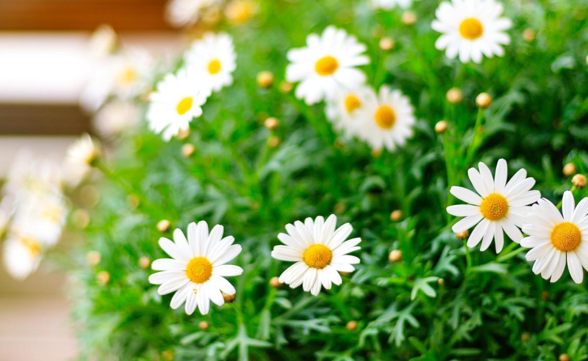 Lavori in giardino nel mese di maggio