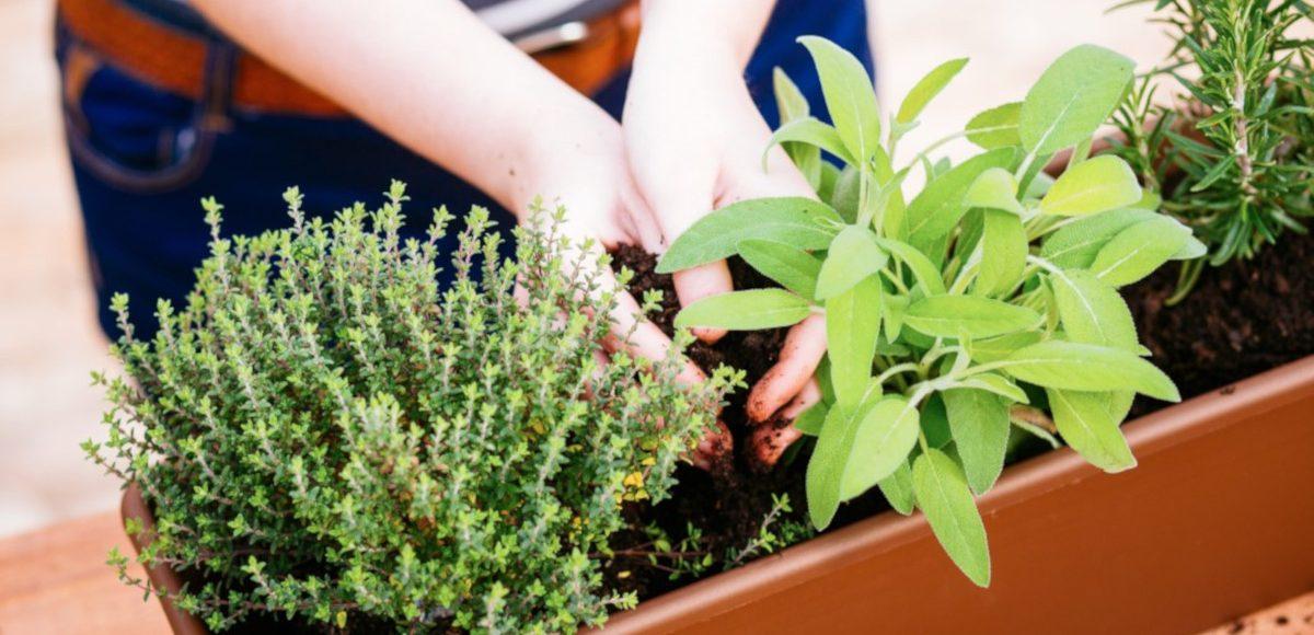 5 cose da sapere per realizzare un orto in casa
