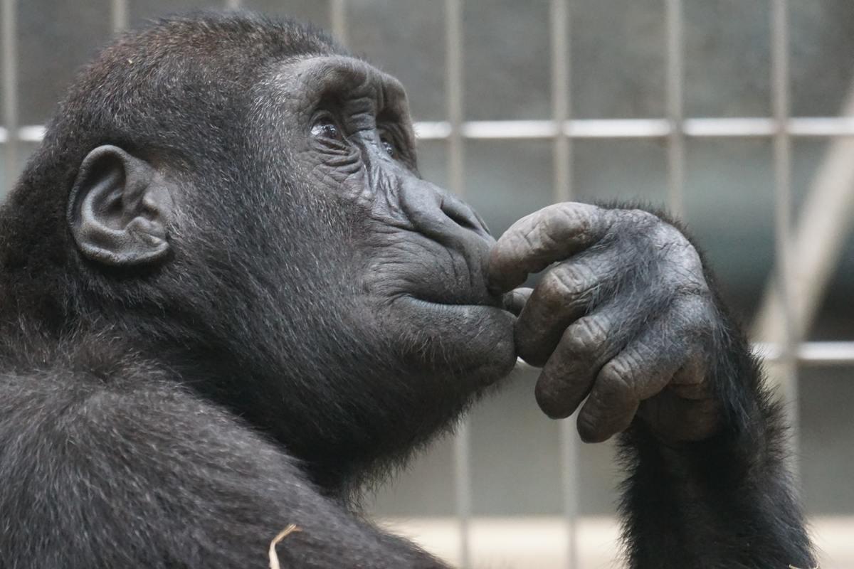 quali sono gli animali più intelligenti