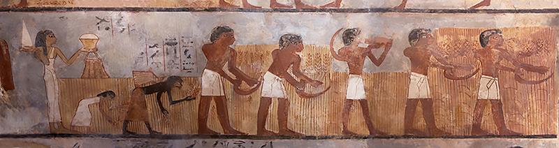 Antico Egitto Cereali
