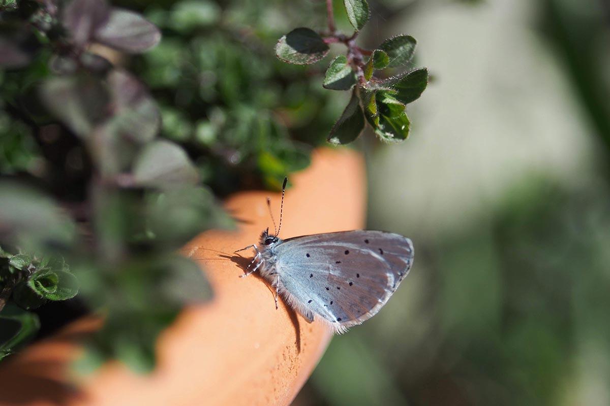 Le farfalle più belle che esistono al mondo