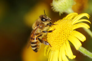 10 azioni per salvare le api