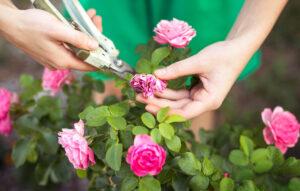 Lavori in giardino nel mese giugno