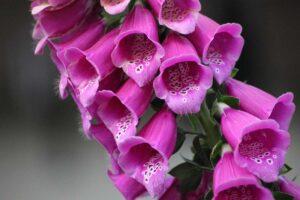 Quali fiori regalare alla Festa della Mamma 2020