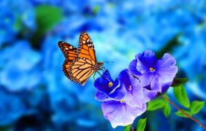 Giardino di farfalle: le piante da scegliere per attirarle