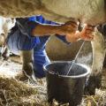 latte vaccine calo vendite