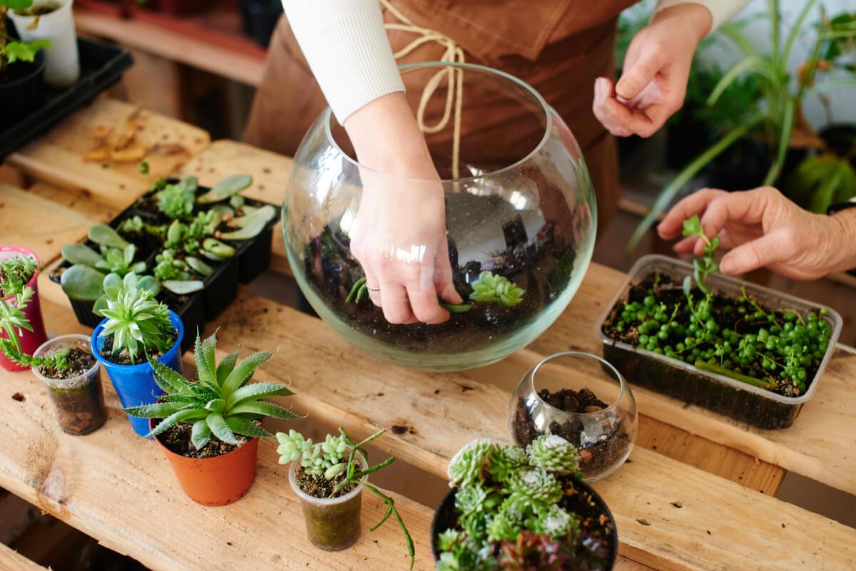 Come realizzare un terrarium perfetto in 5 mosse