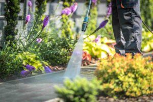 Arredare la casa con le piante sempreverdi