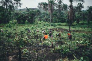 piantare alberi treedom