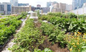 Come realizzare un orto urbano in 5 mosse
