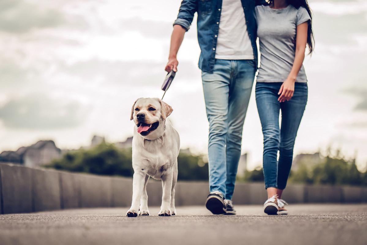 In Germania diventa obbligatorio di portare fuori il cane almeno due volte al giorno