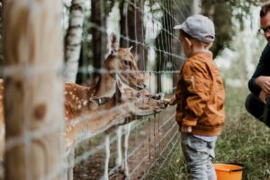 zoo d'italia