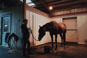 cavallo a casa