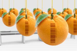Prodotti senza OGM: che significa?