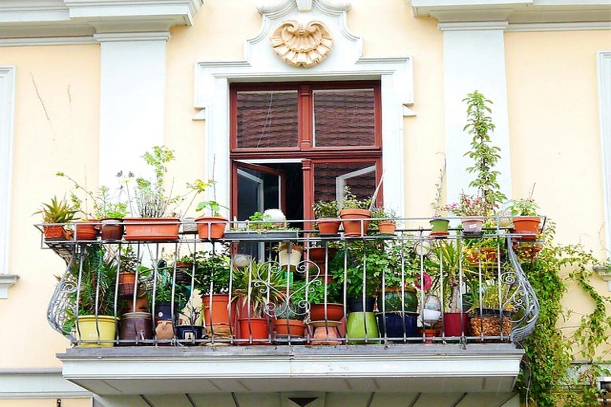 Coltivare il melone sul balcone