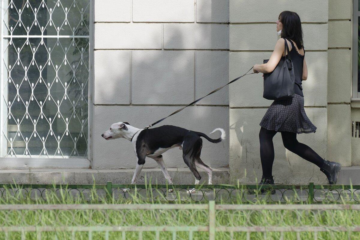 10 oggetti utili per chi ha un cane in casa