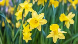 Decorare casa: 5 piante perfette per la stagione autunnale