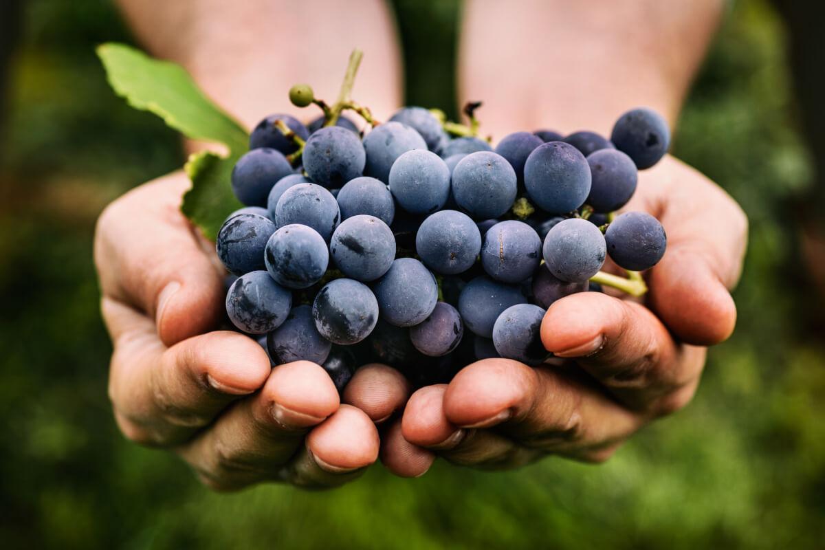 5 benefici dell'uva