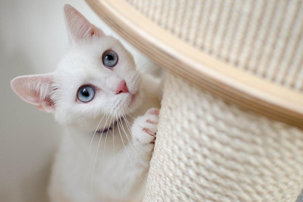 10 oggetti utili per chi ha un gatto in casa