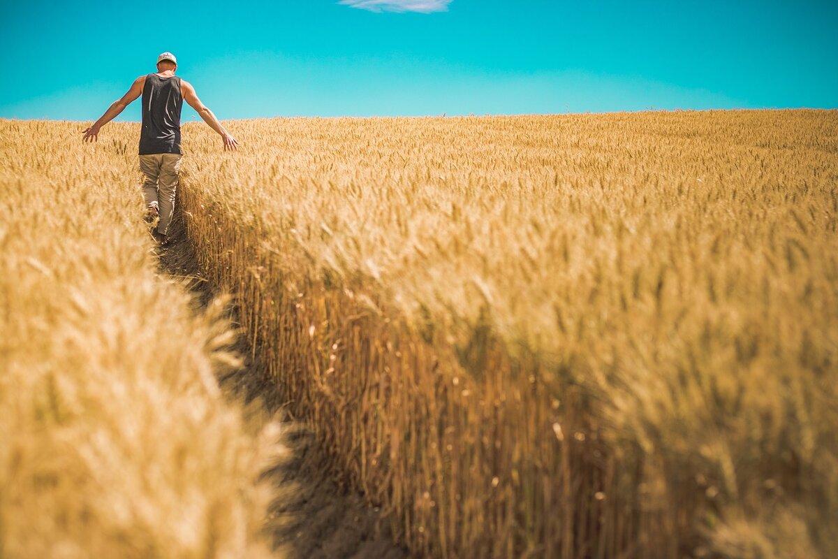 Quante aziende agricole