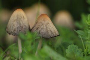 Dove raccogliere i funghi