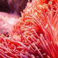 ultiomo maestro del corallo