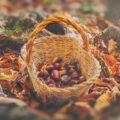 Raccolta delle castagne in Basilicata: dove andare?