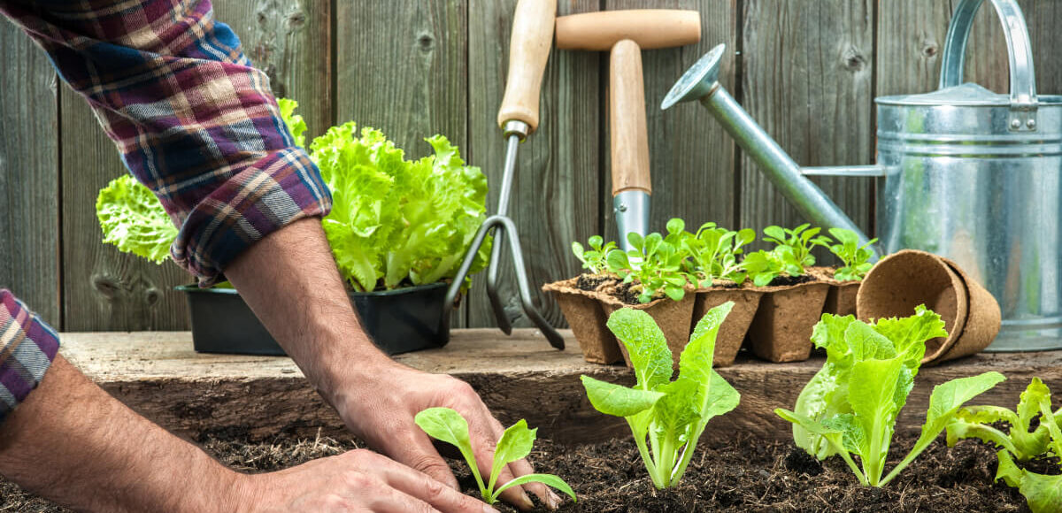 Primi passi per realizzare un piccolo orto domestico