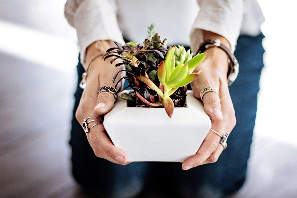 Le piante grasse si possono coltivare in casa