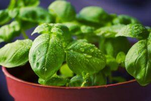 Verdure che si possono coltivare in acqua