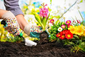 curare il giardino ad agosto