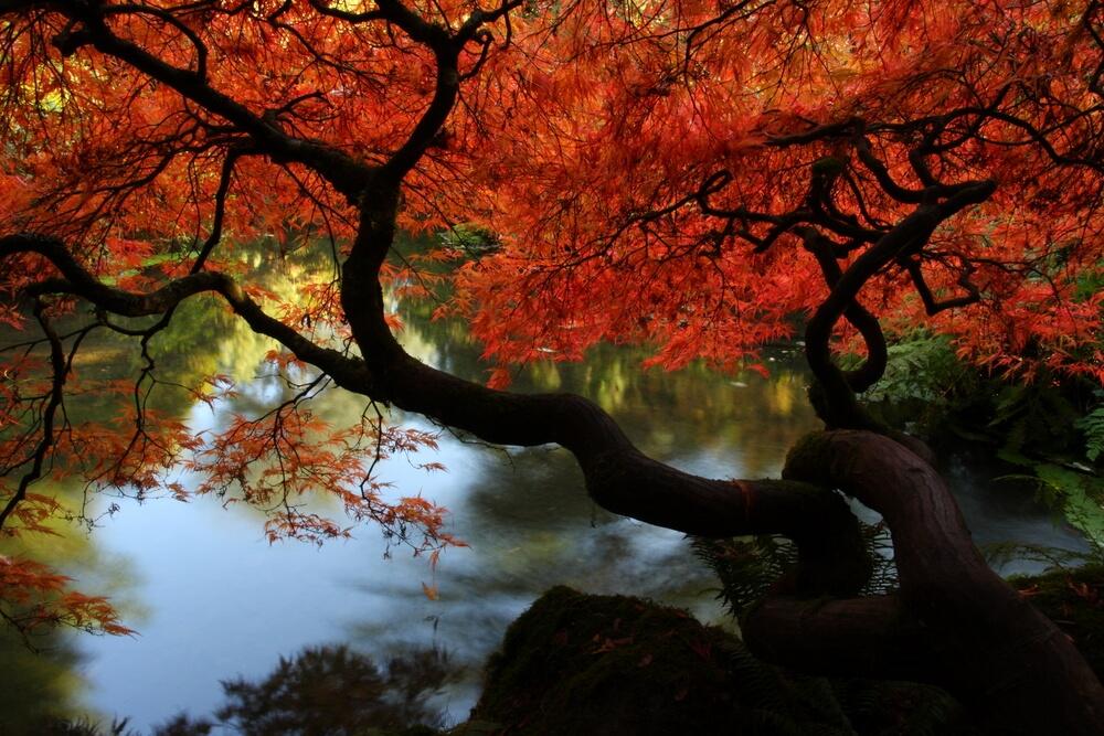 acero rosso giapponese autunno inverno primavera estate