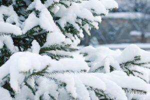 Ecco i benefici della neve