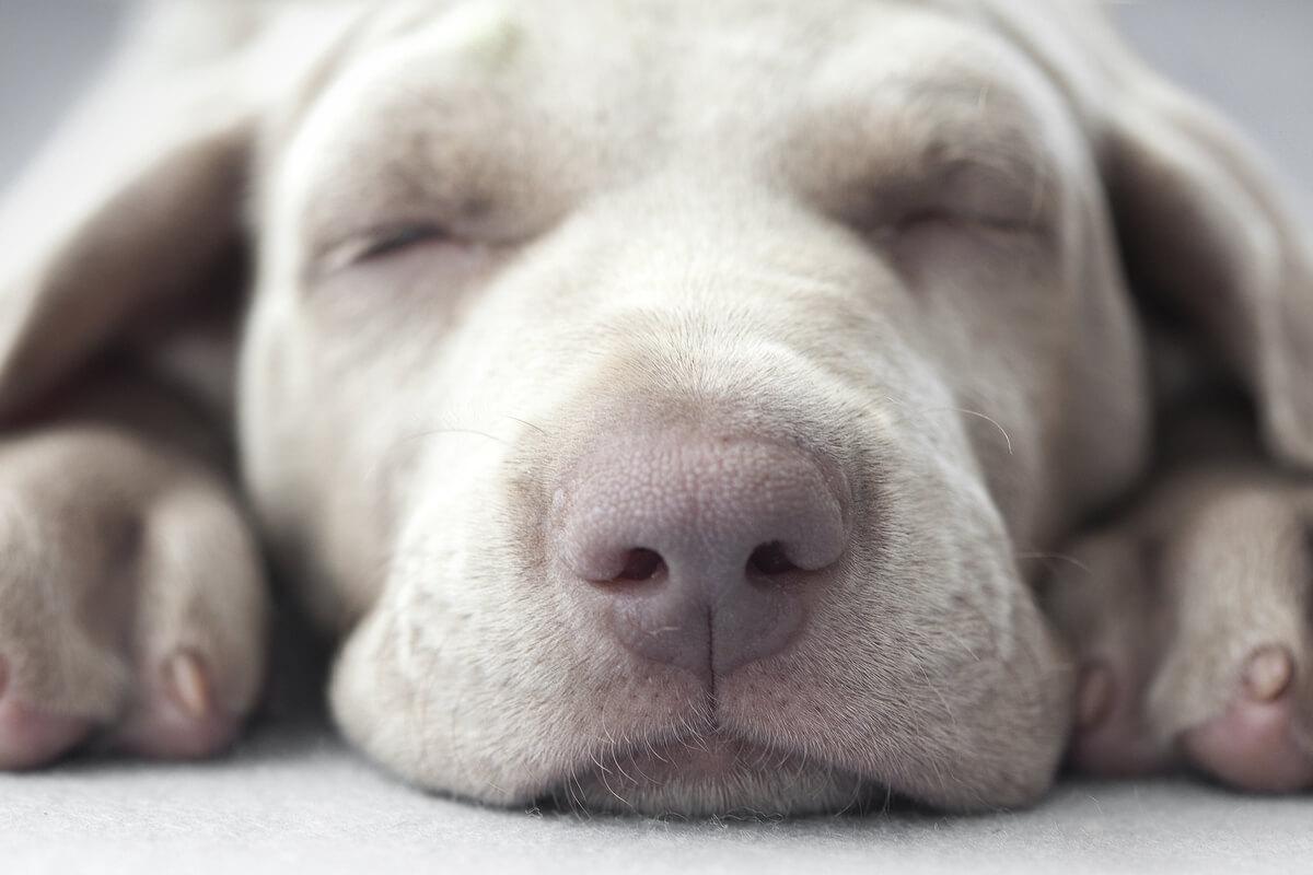 i cani vedono in bianco e nero quali colori vedono
