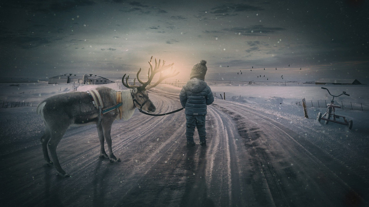 curiosità sulla renna