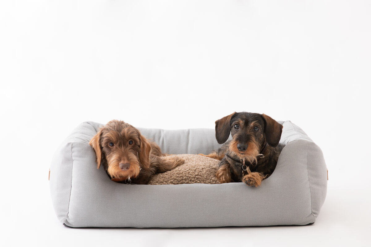 2.8 cuccia Henri canvas grigio dogs