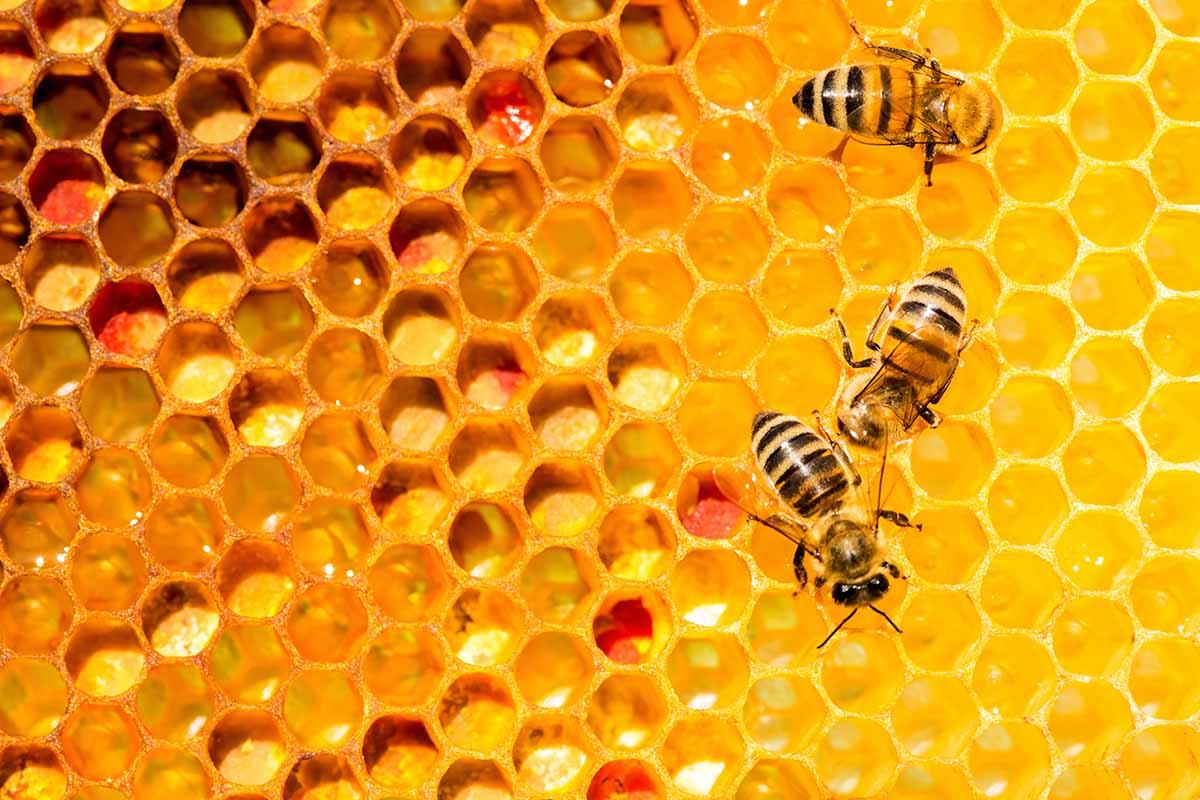 3Bee tecnologia per le api