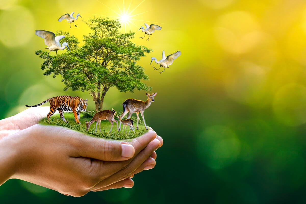 A rischio il 90% degli animali terrestri biodiversità ambiente