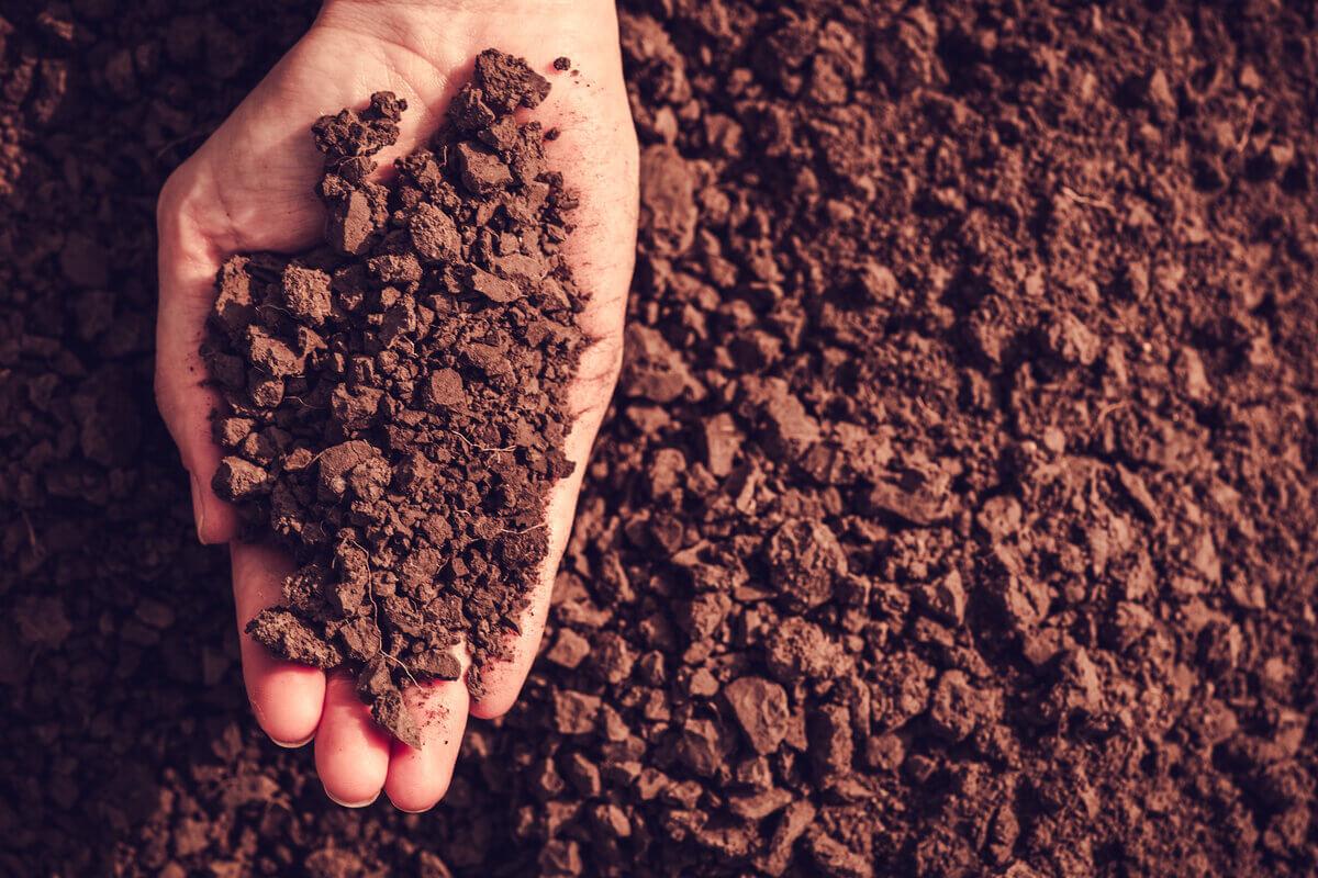Giornata mondiale del suolo, ambiente, suolo, FAO