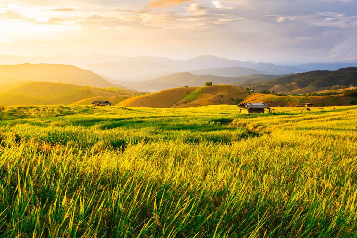 il riso inquina di meno- ambiente sostenibilità